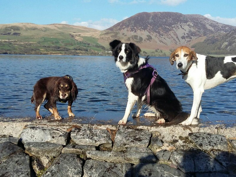 Beautiful day for the dogs in the lakes