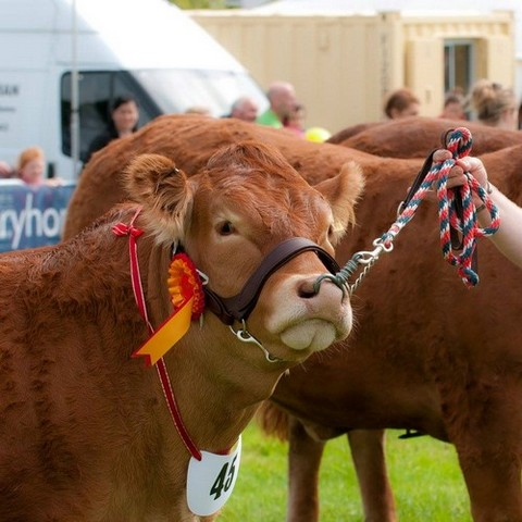 The Cumberland Agricultural Show